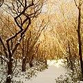 Halla mountain winter trail.jpg