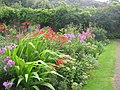 Hartland Abbey's Lovely Walled Gardens - August 2011 - panoramio.jpg
