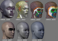 Head evolution.png
