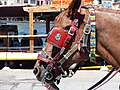 Head of carriage horse in Chania, Creta 12.jpg