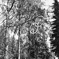 Helsingin olympialaiset 1952 - N210138 - hkm.HKMS000005-000001ps.jpg