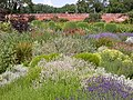 Herbaceous Bed in Walled Garden - geograph.org.uk - 26442.jpg