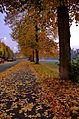 Herbst Hanau.jpg