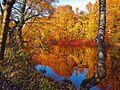 Herbst an der Ruhr.jpg