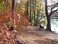 Herbst beim Schlachtensee (Autumn Beside the Schlachtensee) - geo.hlipp.de - 29906.jpg