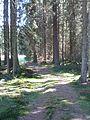 Hinterzartener Moor 1130076.jpg