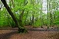 Hodgemoor Woods (13996111322).jpg