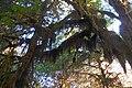 Hoh moss forest cbubar (17116539749).jpg