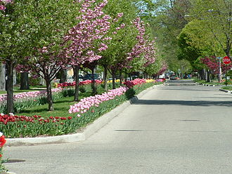 Holland, Michigan - Tulips line the streets