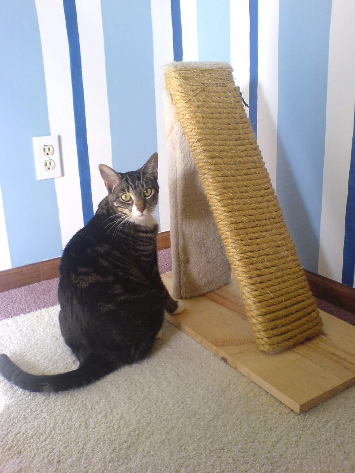 Make A Cat Scratching Post With Sisal Rope