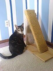 Homemade Cat Litter Box Wooden Enclosure