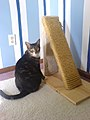 Homemade scratching post.jpg