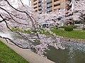Honmachi, Toyama, Toyama Prefecture 930-0029, Japan - panoramio (7).jpg
