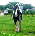 Horse dsc06501.jpg
