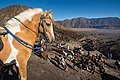 Horses as a means of transportation on Mount Bromo.jpg