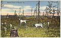 Hunting scene at Moultrie, Ga. (8368125572).jpg