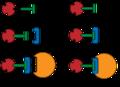 IMAC - Principiell Ligandkoppling och immobilisering.png