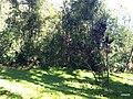 Iguape - SP - panoramio (296).jpg