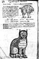 Illustration of dog and cat- Conrad Gesner, 16th Century Wellcome M0017894.jpg