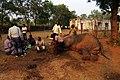 Impressive elephant management PannaTR AJTJ.jpg