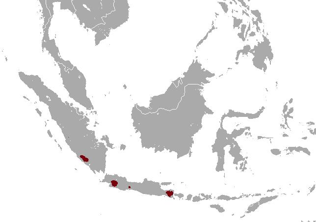 Indonesian Mountain Weasel area