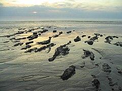 Islands of mud, East Hoyle Bank - geograph.org.uk - 237266.jpg
