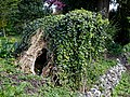 Ivy on tree stump at Myddelton House, Enfield, London, England.jpg