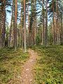 Jääskelä nature trail 9.jpg