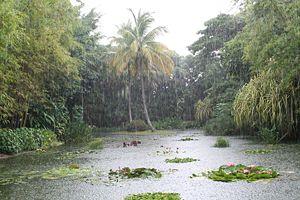 Jardin Botanique De Deshaies Wikipedia
