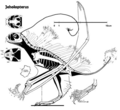 Jeholopterus.png