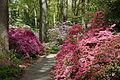 Jenkins Arboretum - DSC00555.JPG