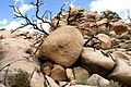Joshua Tree National Park (3432989829).jpg