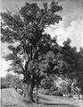 Julius Lange - Landschaft mit Eiche - 8906 - Bavarian State Painting Collections.jpg