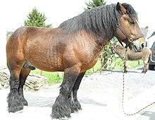 cheval de trait auxois