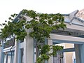 Kamari, santorini, hotel Villa Anneta - panoramio (2).jpg