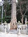 Kamotsuba-jinja Goshinboku.jpg