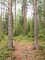 Kangasvuori nature trail - 9.jpg