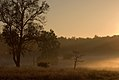 Kanha Meadows CRW 8430.jpg