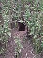Kaninchenbau Eingang HD.JPG