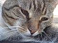 Kat - Katze - Cat - Chat - panoramio - Hänsel und Gretel (6).jpg
