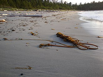 North Coast Trail - Beach at Nissen Bight