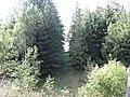 Kertuoja 33218, Lithuania - panoramio (2).jpg