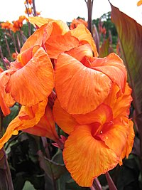 Kew Gardens Orange Flower.jpg