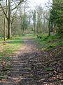 Kiln Wood - geograph.org.uk - 383589.jpg