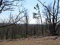Kings Mountain National Military Park - South Carolina (8557797911) (2).jpg