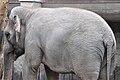 Knie's Kinderzoo Rapperswil - Elephas maximus 2010-09-26 15-30-32.JPG