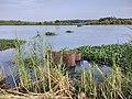Kole Wetlands IMG 20170629 125854 (41).jpg