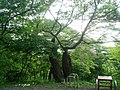 Korea-Seosan-Buseoksa-Near forest-02.jpg