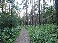 Kotelniki, Moscow Oblast, Russia - panoramio (111).jpg