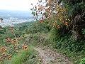 Koya Pilgrimage Routes-Mitanizaka 5.jpg